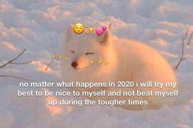 Entertainment: Memes - Positive vibes for 2020. Don't be too hard on yourself, I bet you're doing your best🦊💖🙏 image 2