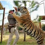 What would you do if this tiger came at you?