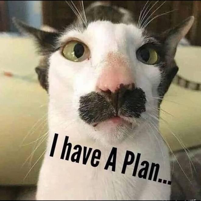 Red Dead Redemption: General - Dutch Van Der Cat 😂 image 1