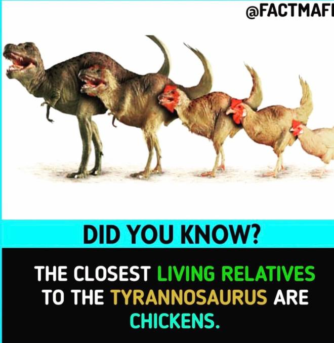 Assassin's Creed: General - This explains those blood thirsty chickens in Odyssey!!! image 1