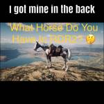 Where are your horses