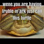 Wene you are having problems just call this turtle