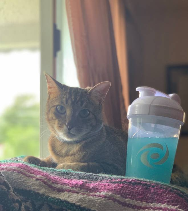 G Fuel: General - my cat loves gfuel too image 1