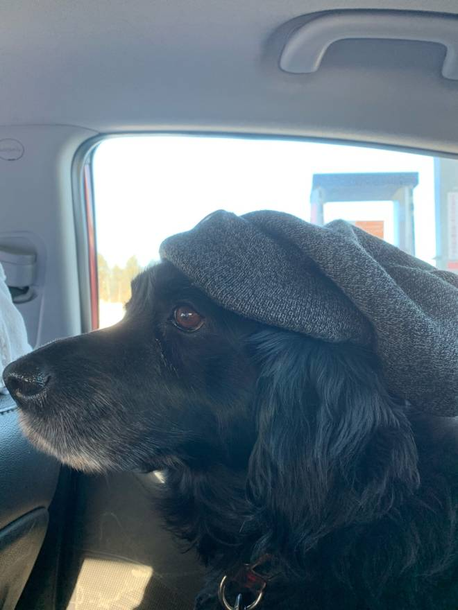 undefined: undefined - Here's my dog I put a hat on her  image 2
