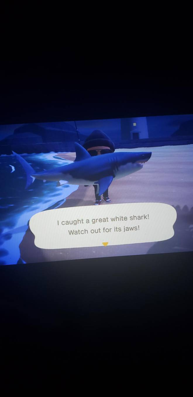 Animal Crossing: Posts - Shark season with no bait 😎 image 1