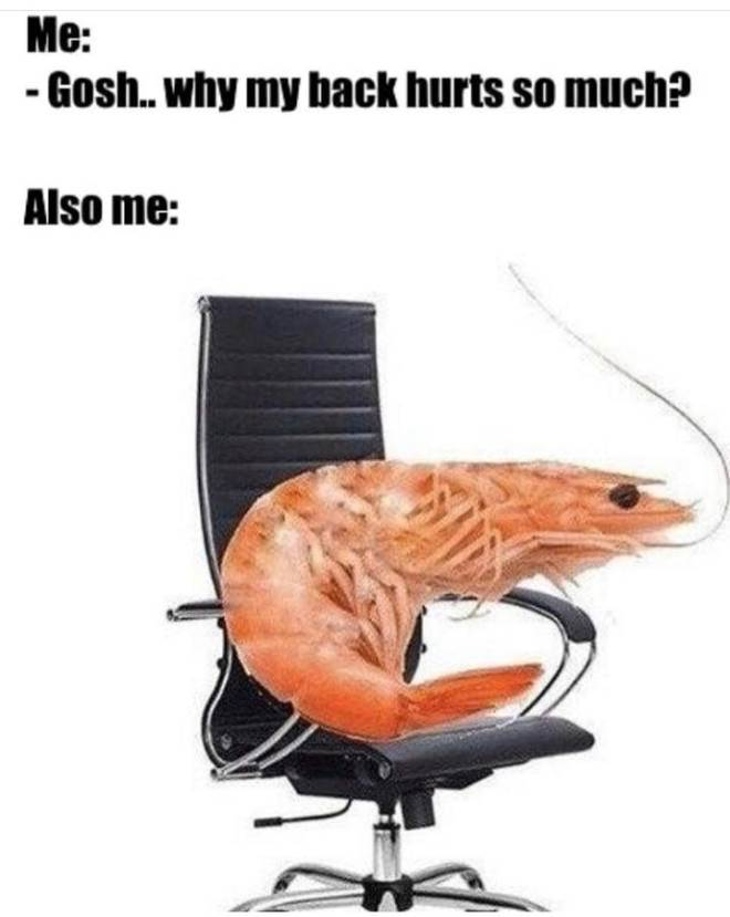 Moot: Questions & Suggestions - 🦐really be shrimping🦐 image 2