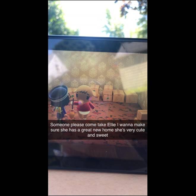 Animal Crossing: Posts - Ellie in boxes  image 2