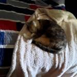 Ella slept in my office during school😍