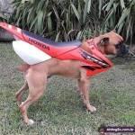 Dirt bike dog!!! that is all...