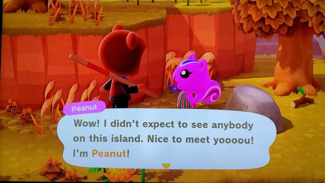 Animal Crossing: Posts - Found my new villager 😍 image 2
