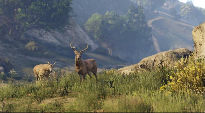 GTA: General - Stumbled upon these beautiful creatures 🥰❤️ image 1