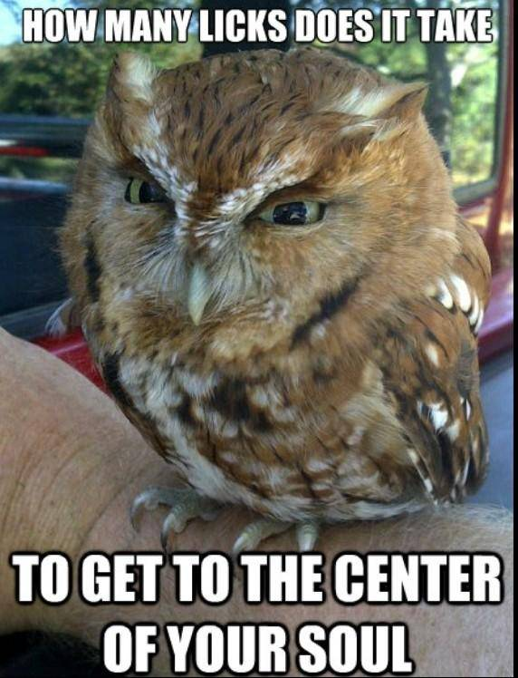 Off Topic: General - I oWl bItCh image 2