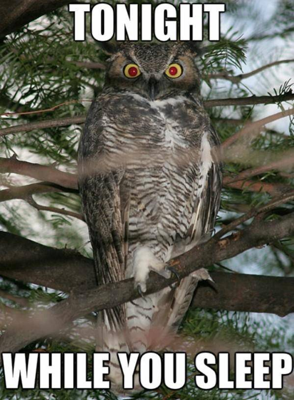Off Topic: General - I oWl bItCh image 3