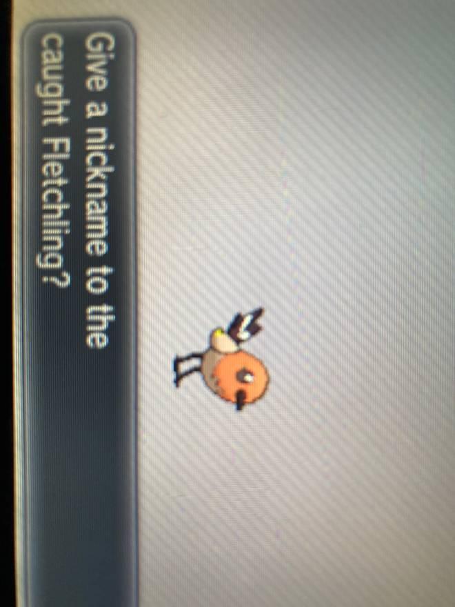 Pokemon: General - My first legit shiny in Pokémon X. image 2