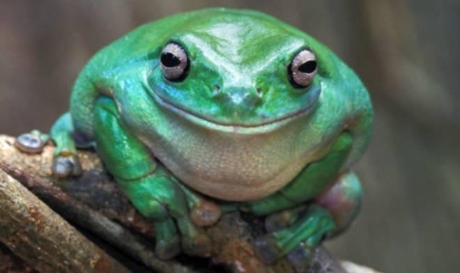 Entertainment: Memes - I love fat frog image 1