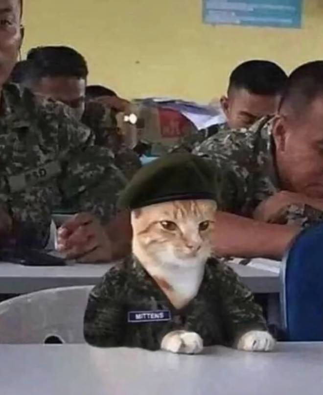 Entertainment: Memes - Cat in the military  image 1