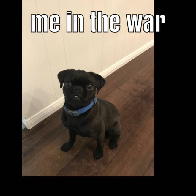 Call of Duty: Memes - Lol that's my dog image 1