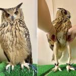 Did you know owls have long legs
