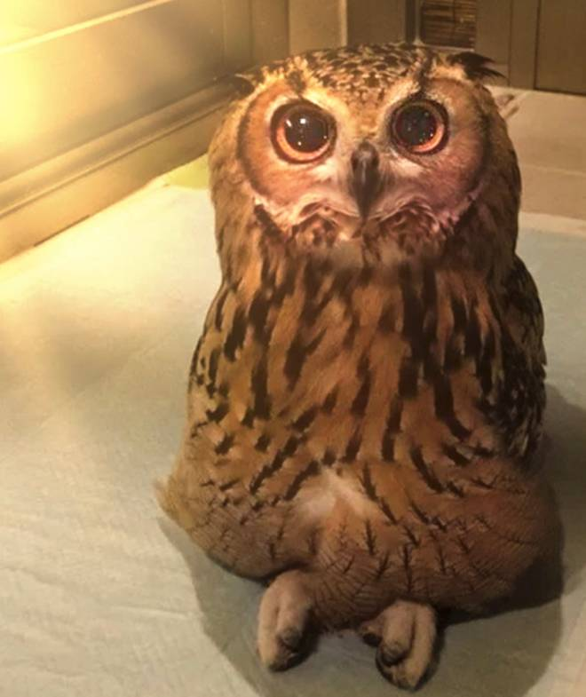 Off Topic: General - Did you know owls can sit Chris cross apple sauce  image 1