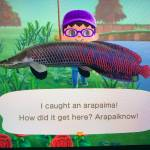 Arapaima Catch...😁😁🐠🐠🐡