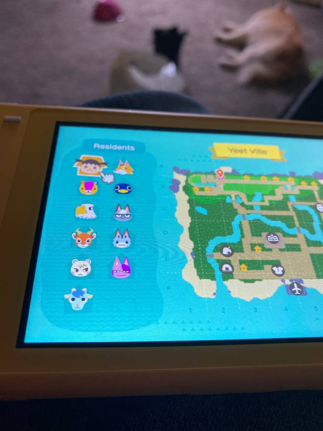 Animal Crossing: Posts - My island is perfect  image 2
