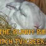 "Starting New Gold Team! ""The Bunny Bin""! (positive mental health focus)"