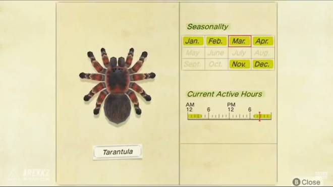 Animal Crossing: Posts - I can't wait till I can catch them again so I can get tarantula island (BTW this picture is old) image 1