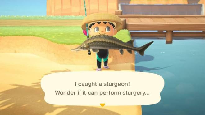 Animal Crossing: Posts - Catch of the Day...Sturgeon! image 1
