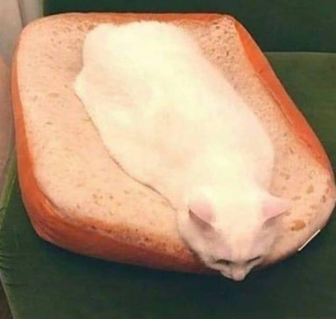 Off Topic: General - cat sandwich  image 2
