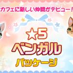 【イベント】「★5ベンガルパッケージ」登場のお知らせ