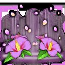 勁舞團M: 商品介紹 - 《限時禮包》尋找專屬魅力誕生花 image 1